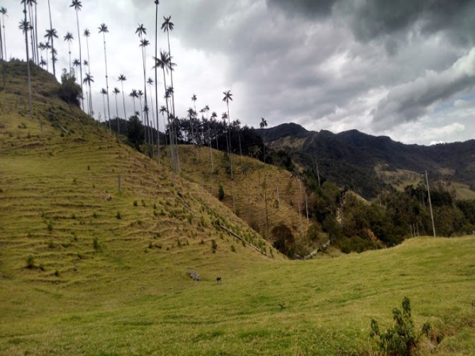 tour-valle-del-cocora-salento