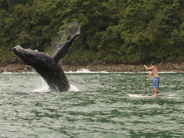 Bahia solano temporada de ballenas